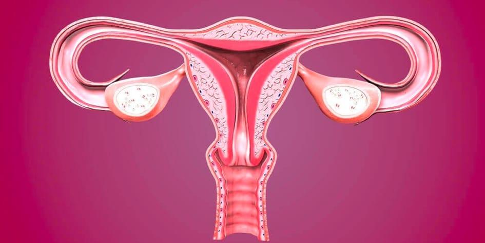 Endometrial Kanser