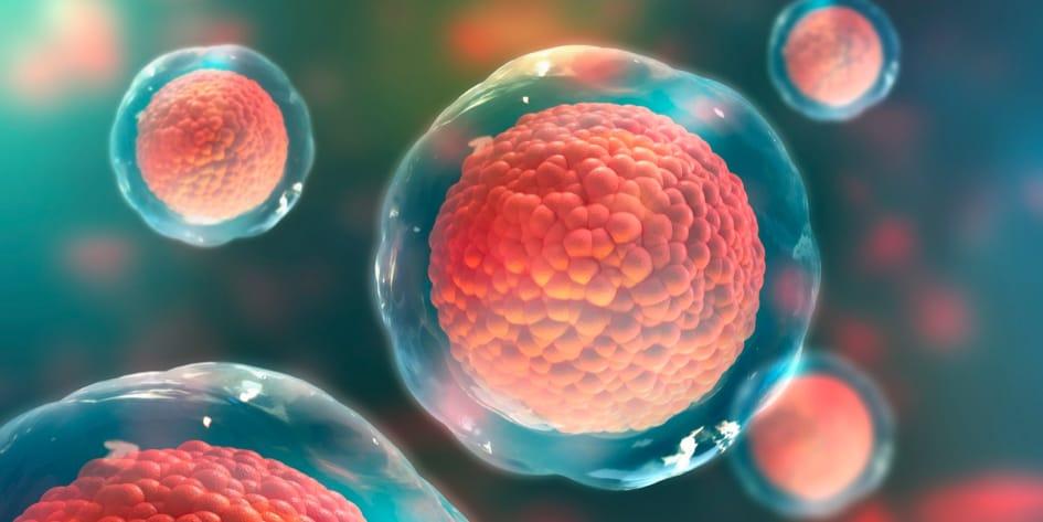Kök Hücre ve Kemik İliği Nedir?